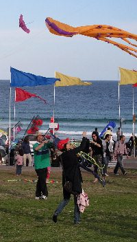 Kites on Bondi Beach